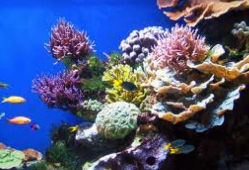 Flynn -Reef - Cairns-Reef