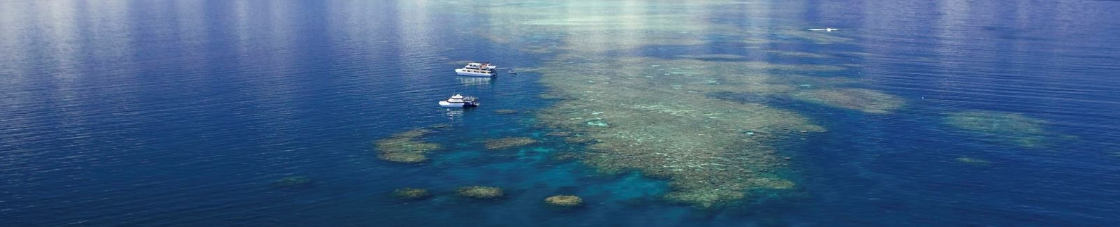Cairns Reef: Great Barrier Reef