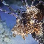 Cairns Reef