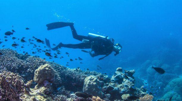 scuba dive Cairns