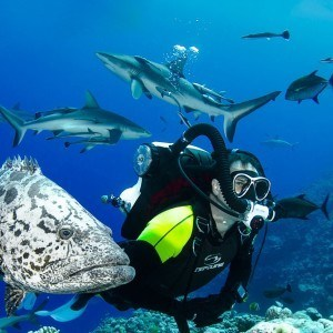 Coral Sea Dive Expeditions 7 nights